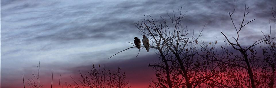 hawks-silly