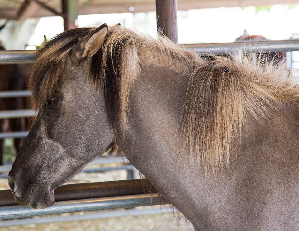 mule 3