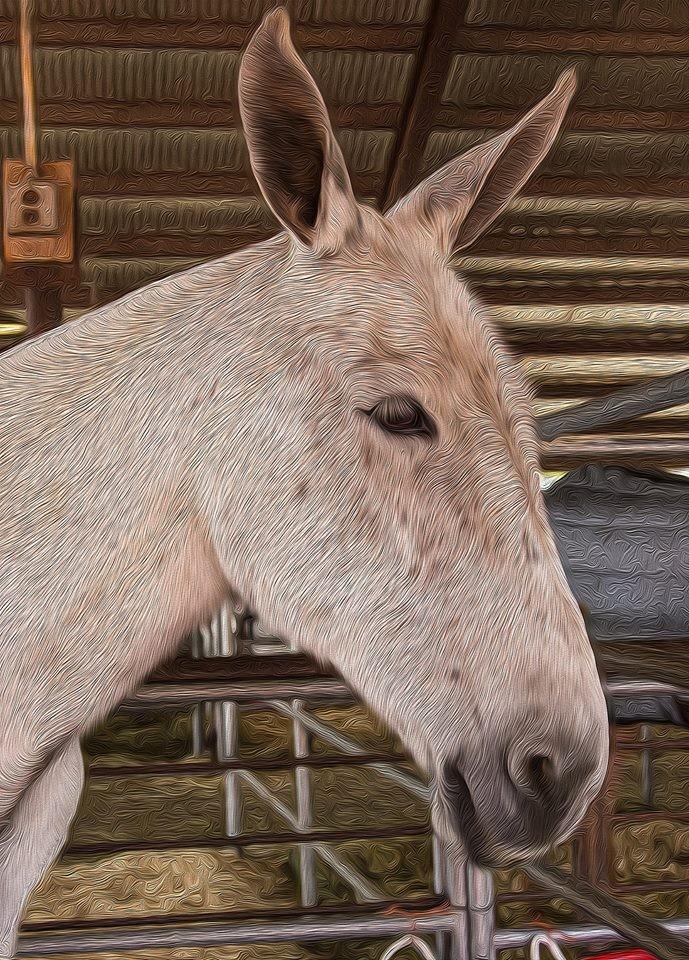 mule 4
