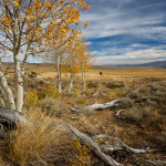 The Eastern Sierra Land Trust Makes Breaking News