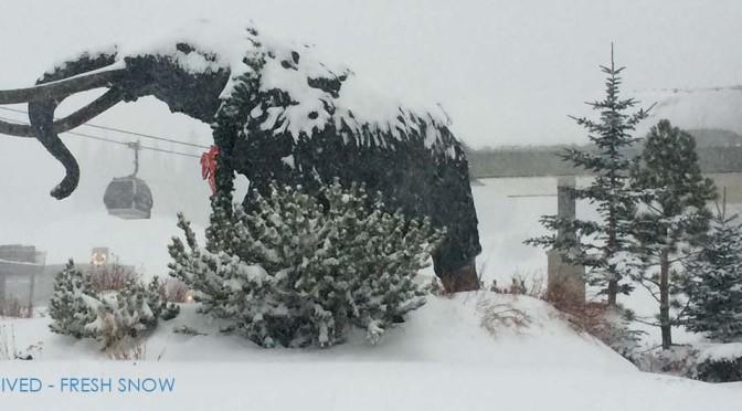 Fresh Snow in Mammoth
