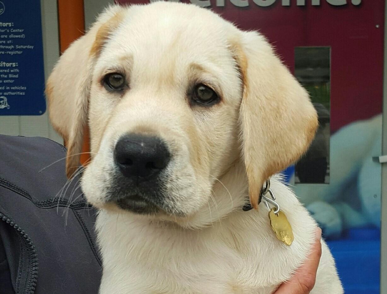 puppy big